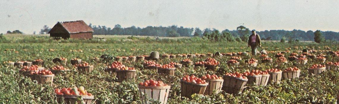 Slider: tomatoes